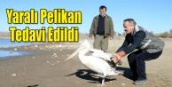 Uşak#039;ta tedavi edilen pelikan doğaya bırakıldı