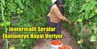 JEOTERMAL İLE 7 BİN TON DOMATES ÜRETİLİYOR