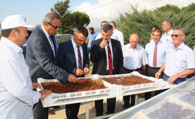 Vali Bektaş, Alaşehir'de Kurutma Tesisini İnceledi
