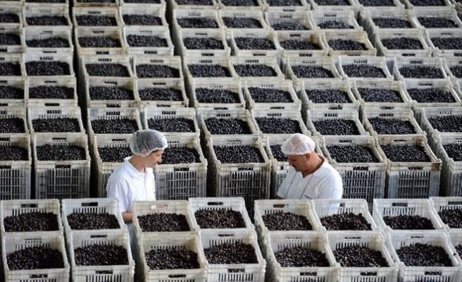 Marmarabirlik 60 Bin Ton Ürün Alacak