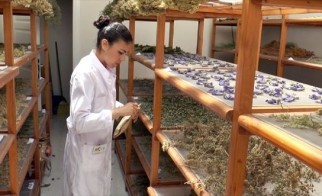 Tıbbi Bitkiler Bahçesinden Üniversite Öğrencilerine Staj İmkanı