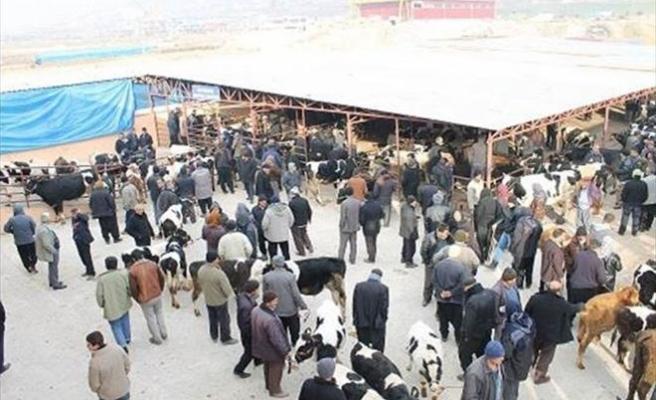 Kahramanmaraş'ta Kurban Satış Ve Kesim Yerleri Belirlendi