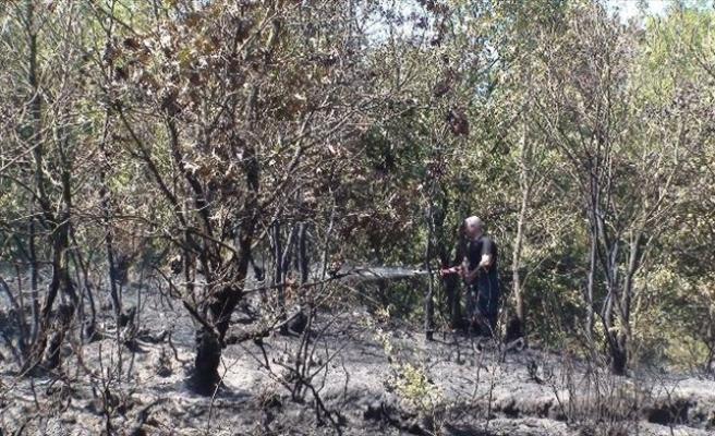 (Özel Haber) Pendik'te Orman Yangını