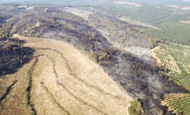 Bakan Müezzinoğlu, Mudanya'daki Ormanlık Alanın Yeniden Canlandırılacağını Açıkladı