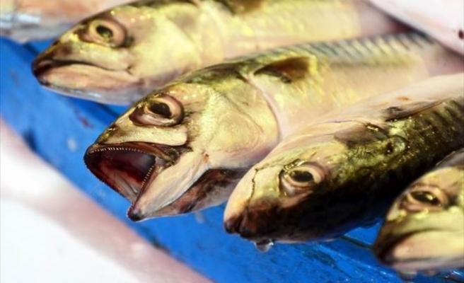 Marmara'daki Balık Çeşitliliği Yüzleri Güldürüyor