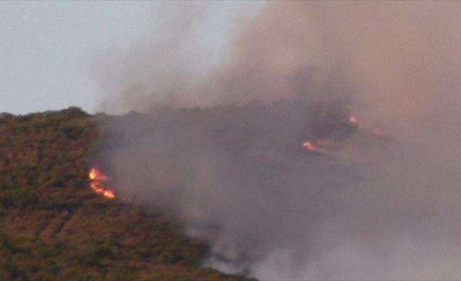 Pendik'te Ormanlık Alanda Korkutan Yangın