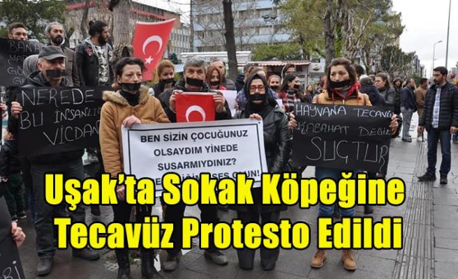 Uşak'ta, Sokak Hayvanlarına Şiddet Protesto Edildi
