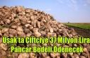 Uşak'ta Çiftçiye 37 Milyon Lira Pancar Bedeli...