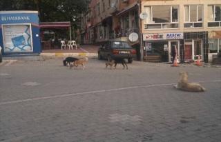 Hisarcık'ta Sahipsiz Köpekler Korkutuyor