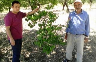 Özcan'dan 'İyi Tarım Uygulamaları' Uyarısı