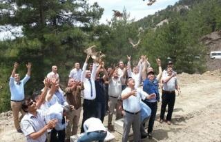 Feke'de 500 Keklik Doğayla Buluştu