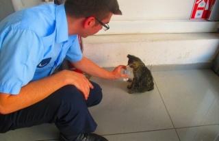 Yaralı Kediye Zabıta Sahip Çıktı