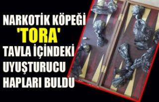 NARKOTİK KÖPEĞİ 'TORA'TAVLA İÇİNDEKİ...