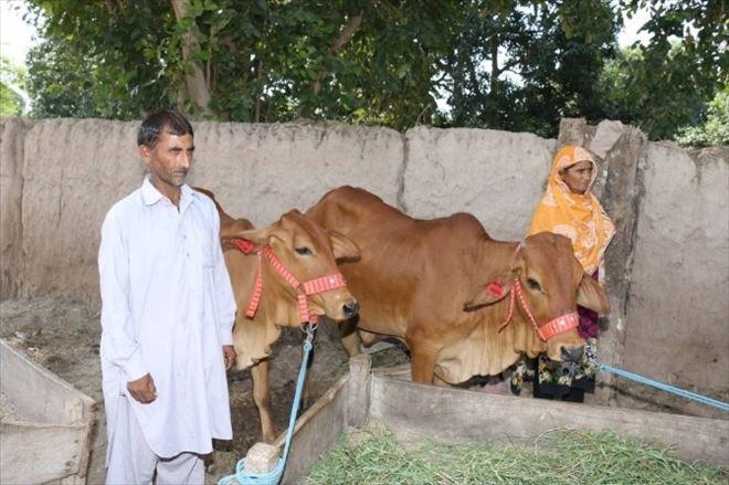 TİKA'nın Desteğiyle Pakistan'da Evde Süt Üretimi Teşvik Ediliyor
