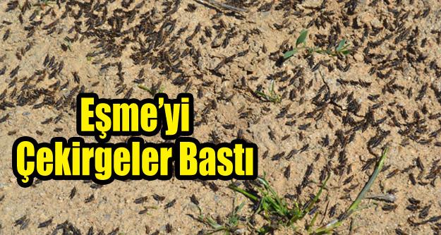 EŞME'Yİ ÇEKİRGELER BASTI