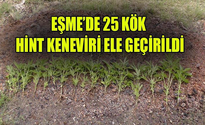 EŞME'DE 25 KÖK HİNT KENEVİRİ EVE GEÇİRİLDİ