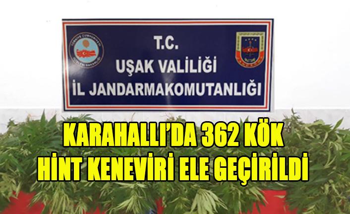 KARAHALLI'DA 362 KÖK HİNT KENEVİRİ ELE GEÇİRİLDİ