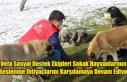 Vefa Sosyal Destek Ekipleri Sokak Hayvanlarının...