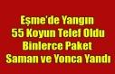 EŞME'DE YANGIN 55 KOYUN VE BİNLERCE PAKET YONCA...