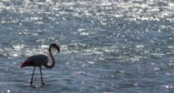 Baharın Müjdecileri Kuş Cennetine Geldi