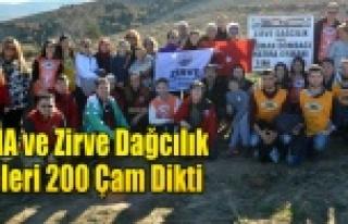 TEMA ve Zirve Dağcılık 200 Çam Dikti