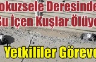 DOKUZSELE DERESİNDEN SU İÇEN KUŞLAR ÖLÜYOR,...