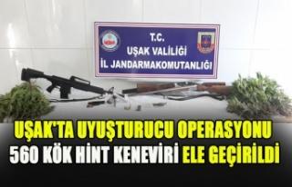 UŞAK'TA UYUŞTURUCU OPERASYONU 560 KÖK HİNT...