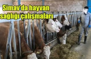Simav'da hayvan sağlığı çalışmaları