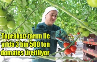 Topraksız tarım ile yılda 3 bin 500 ton domates...