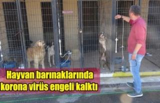 Hayvan barınaklarında korona virüs engeli kalktı
