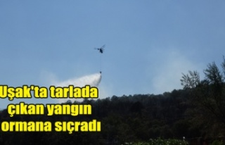 Uşak'ta tarlada çıkan yangın ormana sıçradı