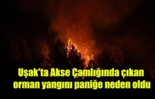 Uşak'ta çıkan orman yangını paniğe neden...