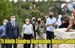 175 Keklik Clandras Köprüsünde Doğaya Salındı