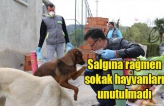 Salgına rağmen sokak hayvanları unutulmadı