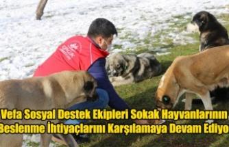 Vefa Sosyal Destek Ekipleri Sokak Hayvanlarının Beslenme İhtiyaçlarını Karşılamaya Devam Ediyor
